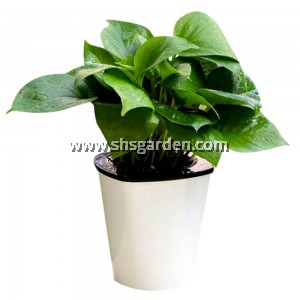 SHS Kebun Self-watering Pot Hydroponic Pot (White Tall) HT11