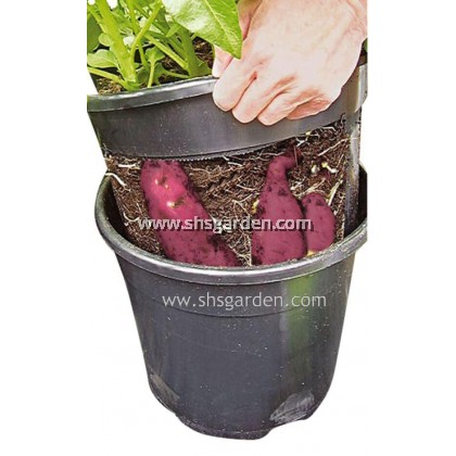 SHS Kebun 2-Piece-Design Potato Planter Pot SHS Kebun