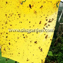 Sticky Trap for Garden Pest Control Double Sided 20 x 25 cm