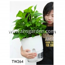 Self-watering Pot Hydroponic Pot (Transparent & White TW264)
