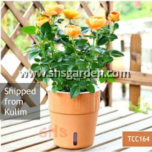 Medium Self Watering Pot Terracota with Water Observation Window Wicking System Hydroponic Pot (TCC164) Garden SHS KEBUN