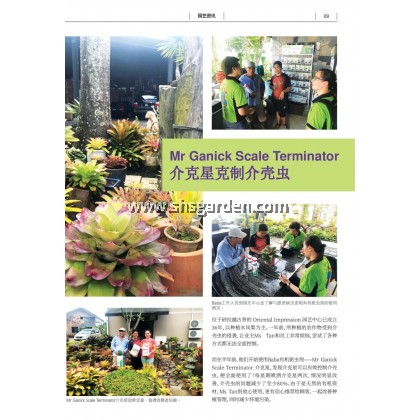 Baba Mr Ganick Scale Terminator Organic Pesticide For Mealy Bugs Whitefly Aphids Mites Non-Toxic 500ml SHS Kebun