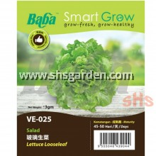 Baba Lettuce Seeds Lettuce Looseleaf VE-025 Cos Lettuce VE-052 Benih Salad Smart Grow SHS Kebun