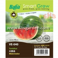 Baba Watermelon Seeds F1 Hybrid Big Fruits or Ice Box Watermelon Non GMO Benih Tembikai Besar Smart Grow VE-040 VE-055 SHS Kebun