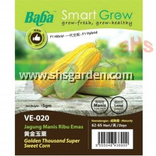Baba Sweet Corn Seeds Benih Jagung Non GMO Golden Thousand Super Pearl Gold Smart Grow VE-020 VE-031 SHS Kebun