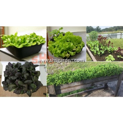 Baba Leafy Fertilizer 532 Organic Fertilizer for Vegetables Ornamental Plants Turf Baja Daun SHS Kebun