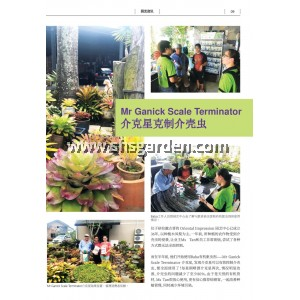 Baba Mr Ganick Scale Terminator Organic Pesticide For Mealy Bugs Whitefly Aphids Mites Non-Toxic 1 Litre Concentrate SHS Kebun