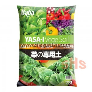 Baba Asparagus Seed Suitable for Lowland F1 Non-GMO 20 Seeds Benih VE-063 SHS Kebun