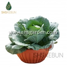 BABA BI-206 Biodegradable Flower Shallow Pot Pasu Bunga 39.7cm x 16.8cm SHS KEBUN